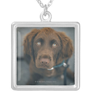 A brown dog. silver plated necklace