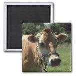 A Brown Jersey Cow In Summer Meadow Fridge Magnet Fridge Magnets