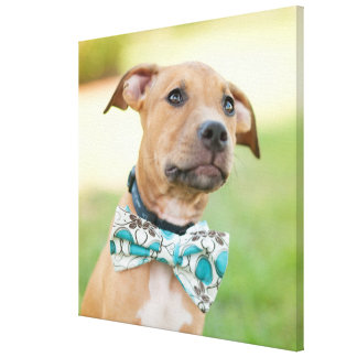 A Brown Puppy Wears A Colorful Bow Tie Canvas Print