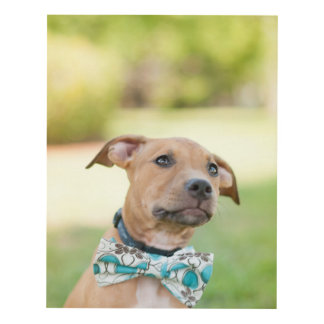A Brown Puppy Wears A Colorful Bow Tie Panel Wall Art