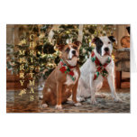 A Bubba and Kensie Christmas Greeting Cards