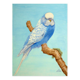 A Budgie perched on a branch Postcard