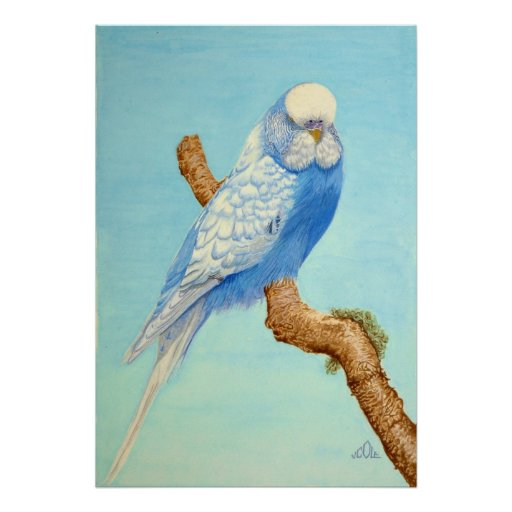 A Budgie perched on a branch Posters