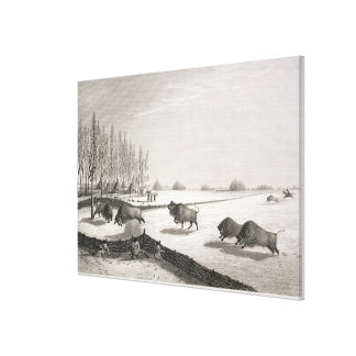 A Buffalo Pound, from 'Narrative of a Journey to t Canvas Prints
