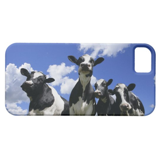 A bugs eye view of four young calves iPhone SE/5/5s case