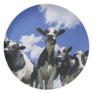 A bugs eye view of four young calves melamine plate