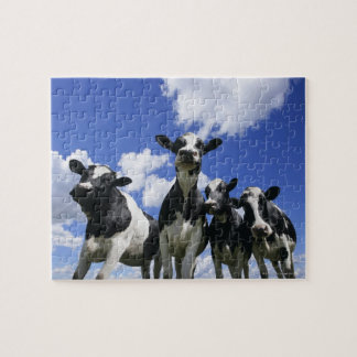 A bugs eye view of four young calves jigsaw puzzle