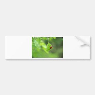 A Bug's Life.JPG Bumper Sticker