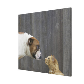 A Bulldog and a cat are face-to-face in a stand Gallery Wrapped Canvas