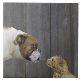 A Bulldog and a cat are face-to-face in a stand Ceramic Tile