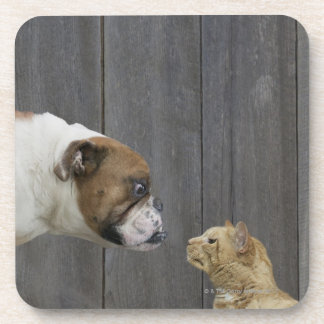 A Bulldog and a cat are face-to-face in a stand Coaster