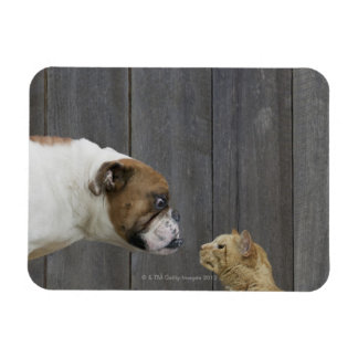 A Bulldog and a cat are face-to-face in a stand Magnet