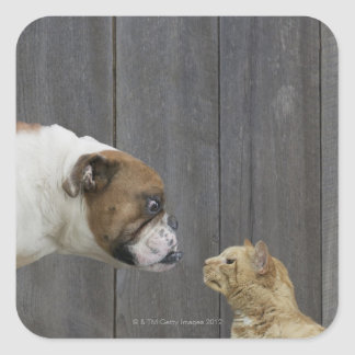 A Bulldog and a cat are face-to-face in a stand Square Sticker