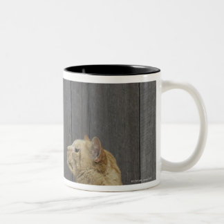 A Bulldog and a cat are face-to-face in a stand Two-Tone Coffee Mug