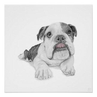 A Bulldog Puppy Drawing Poster
