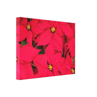 A bunch of Brightly Colored Christmas Poinsettias Canvas Print