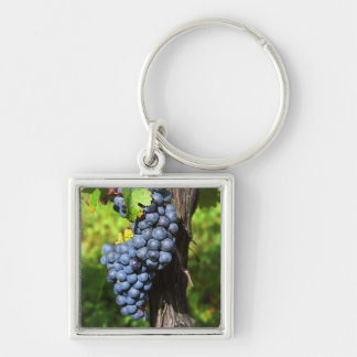 A bunch of grapes ripe merlot on a vine with keychain