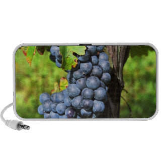 A bunch of grapes ripe merlot on a vine with mini speaker