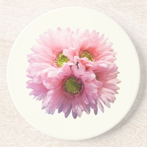 A Bunch of Pink Daisies Beverage Coaster