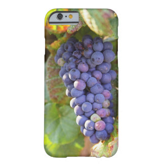 A bunch of Pinot Noir grapes in a Chambertin Barely There iPhone 6 Case