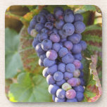 A bunch of Pinot Noir grapes in a Chambertin Coasters