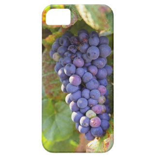 A bunch of Pinot Noir grapes in a Chambertin iPhone 5 Case