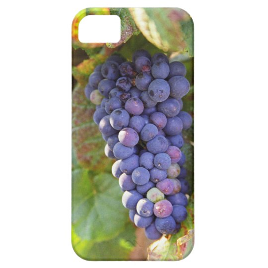 A bunch of Pinot Noir grapes in a Chambertin iPhone SE/5/5s Case