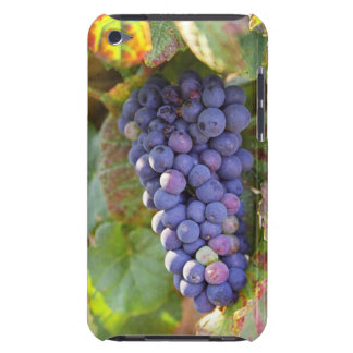 A bunch of Pinot Noir grapes in a Chambertin iPod Touch Case
