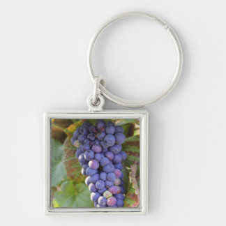 A bunch of Pinot Noir grapes in a Chambertin Keychain