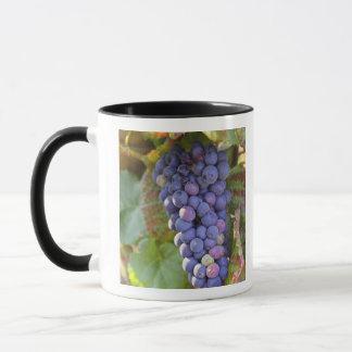 A bunch of Pinot Noir grapes in a Chambertin Mug