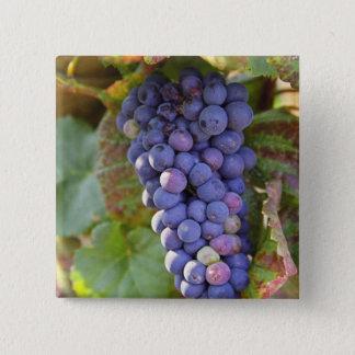 A bunch of Pinot Noir grapes in a Chambertin Pinback Button