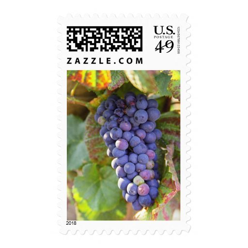 A bunch of Pinot Noir grapes in a Chambertin Postage Stamp