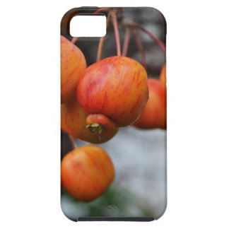 A Bunch of Red Autumn Apples iPhone SE/5/5s Case