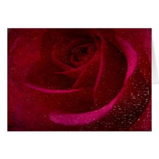 A Burgundy Rose in Snow Card