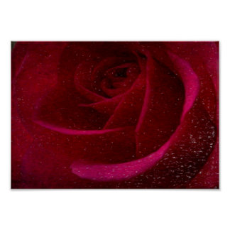 A Burgundy Rose in Snow Poster