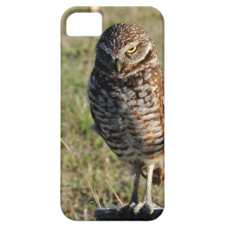 A burrowing owl giving warning look iPhone SE/5/5s case