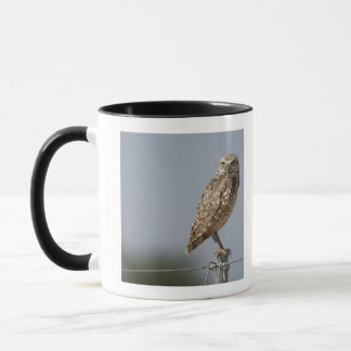 A burrowing owl sitting on a fence post. Taken Mug