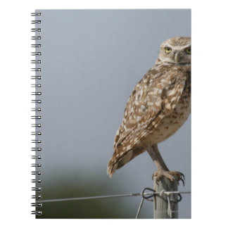 A burrowing owl sitting on a fence post. Taken Notebook