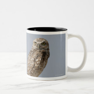 A burrowing owl sitting on a fence post. Taken Two-Tone Coffee Mug