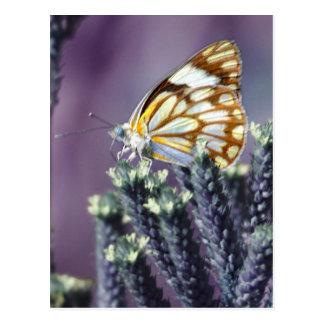 A butterflies beautiful life postcards