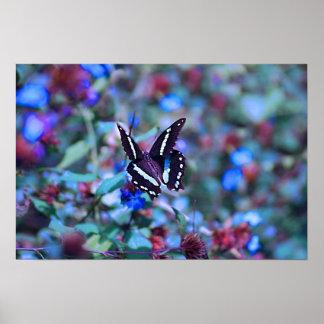 A Butterflies Flitter and Flutter Print