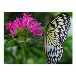 A butterflies grace postcard