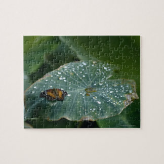 A Butterfly on a leaf with water droplets Puzzles