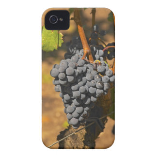 A Cabernet Franc bunch of grapes on a vine in Case-Mate iPhone 4 Case