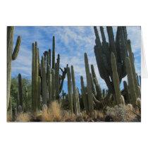 A Cacti Farm In Arizona