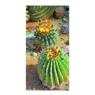 A Cacti Photo Card