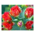 A Cactus Flower Crown - 8x10 Photo Print