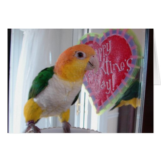 A Caique Valentine Card