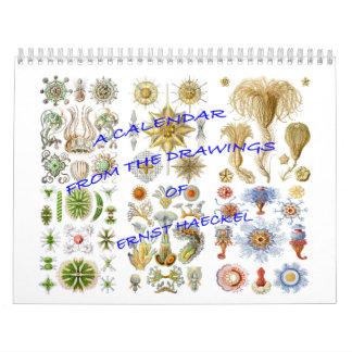 A Calendar from the Drawings of Ernst Haeckel
