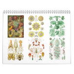 A Calendar from the Drawings of Ernst Haeckel.